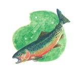 statefish.jpg